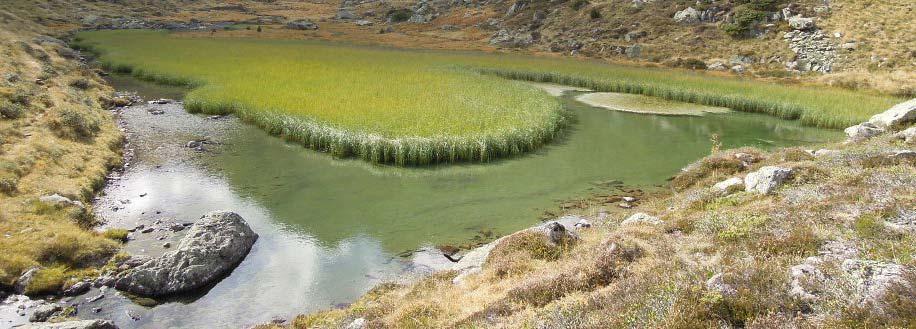 Tourbière haute active située sur le site Natura 2000 Vallée de l'Aston